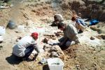 Excavation of a sauropod dinosaur in Patagonia